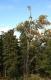 Na niebieskim szlaku do Bedrichovki